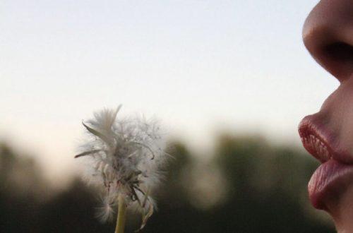 Article : Je vous souhaite du bon, du beau et de l'inattendu!