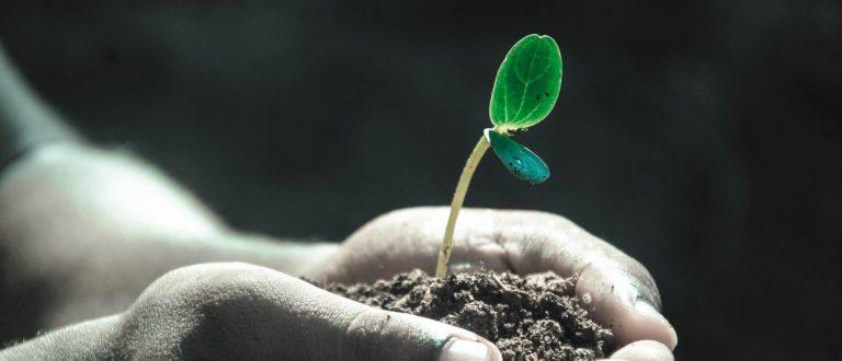 Article : Aux arbres citoyens… oui encore!